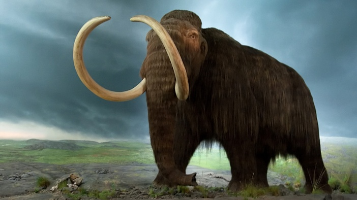 mammoth-1024x576
