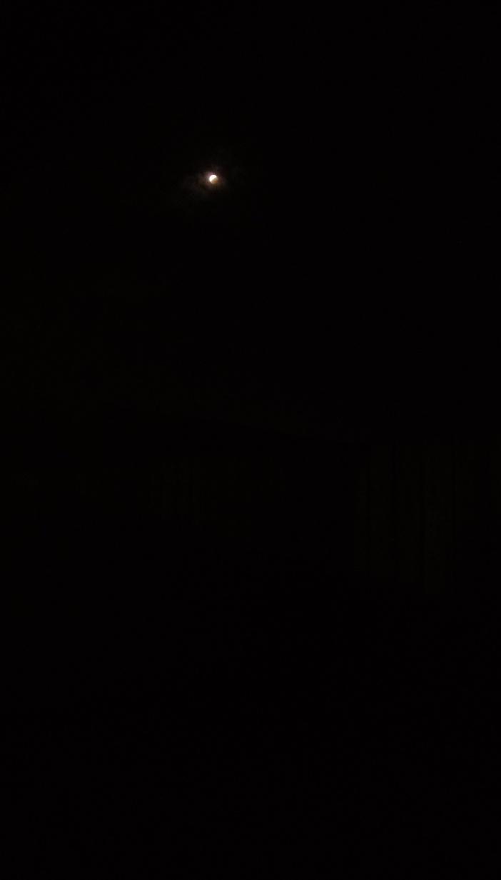 IMAG8501