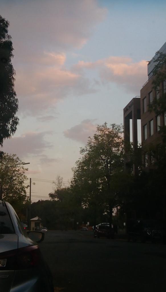 IMAG8561