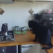catpotcoffee